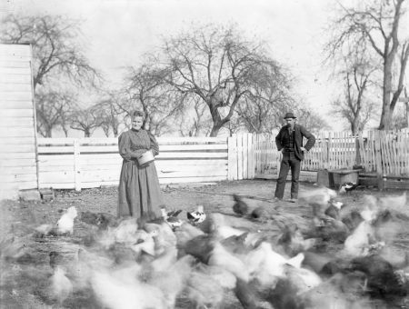 Feeding chickens in Princeton Township, ca. 1890